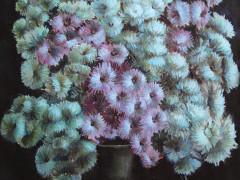 Хризантеми,60Х50,п